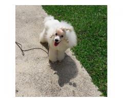 Supergroomers Pets Academy Pte. Ltd.